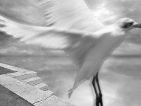 Reflections#15  -  ©Franco Donaggio, tutti i diritti riservati