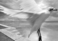 Reflections 15  /  ©Franco Donaggio