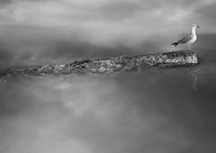 Reflections 20  /  ©Franco Donaggio