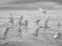 Reflections#3  -  ©Franco Donaggio, tutti i diritti riservati