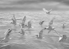Reflections 3  /  ©Franco Donaggio