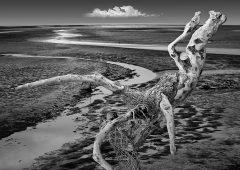 Reflections 43  /  ©Franco Donaggio