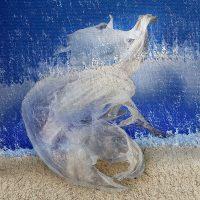 Sedimenti - volo di plastiche  /  ©Franco Donaggio
