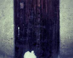 Bosco del pensiero - abbandono /  ©Franco Donaggio, tutti i diritti riservati