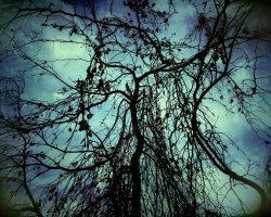 Il bosco del pensiero - abbraccio  /  © Franco Donaggio, tutti i diritti riservati