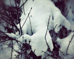 Il bosco del pensiero - creatura di neve  /  © Franco Donaggio, tutti i diritti riservati