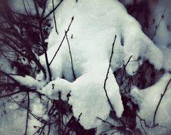 Bosco del pensiero - creatura di neve  /  ©Franco Donaggio, tutti i diritti riservati