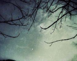 Il bosco del pensiero - crepuscolo  /  © Franco Donaggio, tutti i diritti riservati