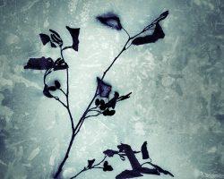 Il bosco del pensiero - forme del freddo  /  © Franco Donaggio, tutti i diritti riservati