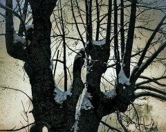 Bosco del pensiero - il guardiano del crepuscolo /  ©Franco Donaggio, tutti i diritti riservati