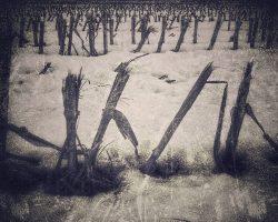 Il bosco del pensiero - in marcia  /  © Franco Donaggio, tutti i diritti riservati