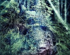 Bosco del pensiero - l'inganno dell'elfo  /  ©Franco Donaggio, tutti i diritti riservati