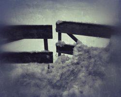 Il bosco del pensiero - inizio del cammino  /  © Franco Donaggio, tutti i diritti riservati
