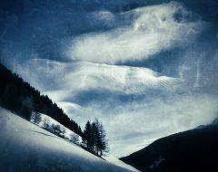 Bosco del pensiero - la natura si rivela  /  ©Franco Donaggio, tutti i diritti riservati