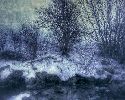 Il bosco del pensiero - l'acqua riposa  /  © Franco Donaggio, tutti i diritti riservati