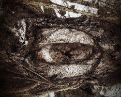 Il bosco del pensiero - l'oracolo del sentiero  /  © Franco Donaggio, tutti i diritti riservati