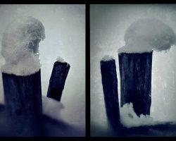 Il bosco del pensiero - metamorfosi #3#4  -  © Franco Donaggio, tutti i diritti riservati