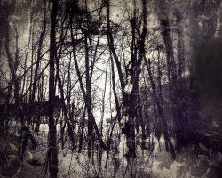 Il bosco del pensiero - nel mezzo del cammin...  /  © Franco Donaggio, tutti i diritti riservati