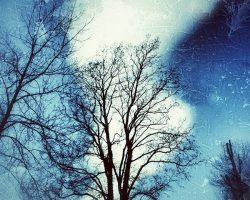 Il bosco del pensiero - notte di Natale  /  © Franco Donaggio, tutti i diritti riservati