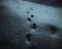 Bosco del pensiero - notte di luna piena  /  ©Franco Donaggio, tutti i diritti riservati