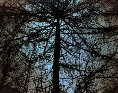 Bosco del pensiero - oltre l'oscurità  /  ©Franco Donaggio, tutti i diritti riservati