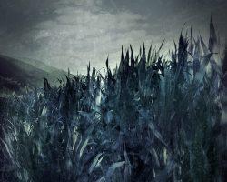 Il bosco del pensiero - orizzonte negato  /  © Franco Donaggio, tutti i diritti riservati