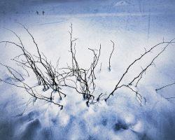 Il bosco del pensiero - prima del risveglio  /  © Franco Donaggio, tutti i diritti riservati