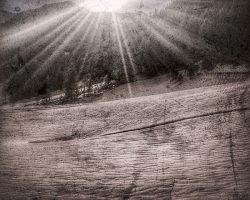 Il bosco del pensiero - risvegli  /  © Franco Donaggio, tutti i diritti riservati