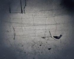 Il bosco del pensiero - segni umani #2  /  © Franco Donaggio, tutti i diritti riservati