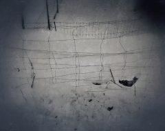 Bosco del pensiero - segni umani 2 /  ©Franco Donaggio, tutti i diritti riservati