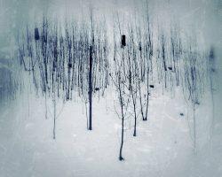 Il bosco del pensiero - solitudini  -  © Franco Donaggio, tutti i diritti riservati