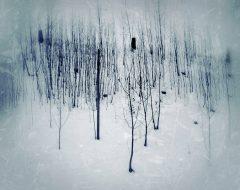 Bosco del pensiero - solitudini  /  ©Franco Donaggio, tutti i diritti riservati