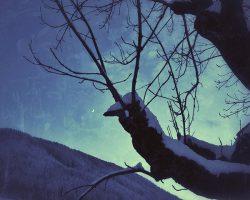 Il bosco del pensiero - terra degli Elfi  /  © Franco Donaggio, tutti i diritti riservati