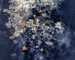 Il bosco del pensiero - universo  -  © Franco Donaggio, tutti i diritti riservati